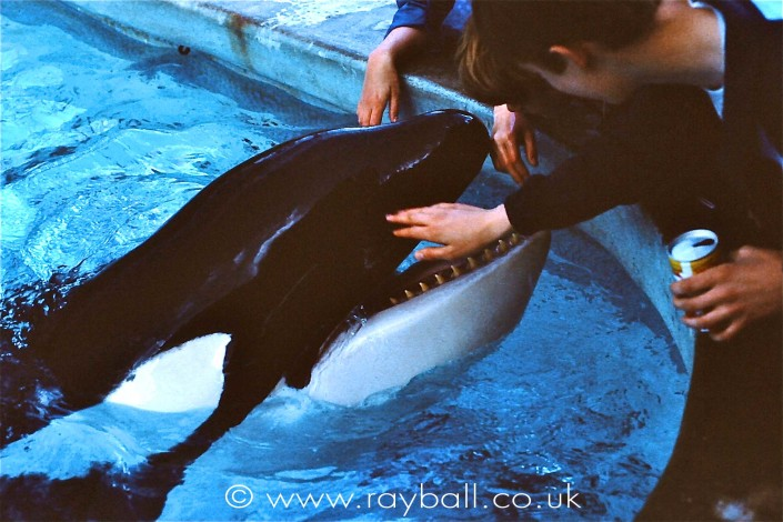 Kids stroking orca at Windser Safari Park by Epsom Photography Surrey.